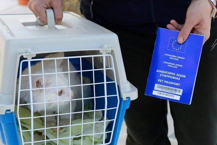 PHOTO: Kunkush obtained a pet passport before being flown to Berlin. (Facebook: Reunite Dias)