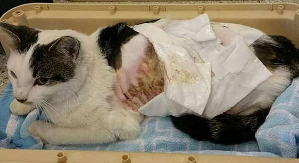 UPDATE – The Scalded Cat is Recovering, But The Road to Recovery May Be a Long One