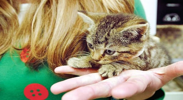 PETSAFE Grant in Tennessee Providing Free Spaying and Neutering