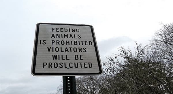 """One Georgia Town is Now Saying, """"Stop Feeding Stray Cats, or Else!"""""""