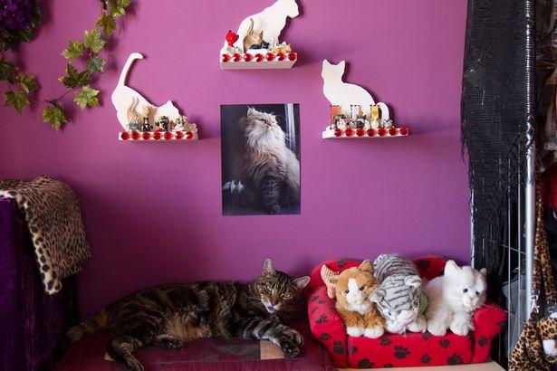 Cat-themed memorabilia which adorn Barbarella's house