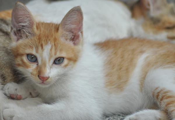 PETA has offered a P50,000 reward for any information leading to the arrest of the cat-killer. File photo