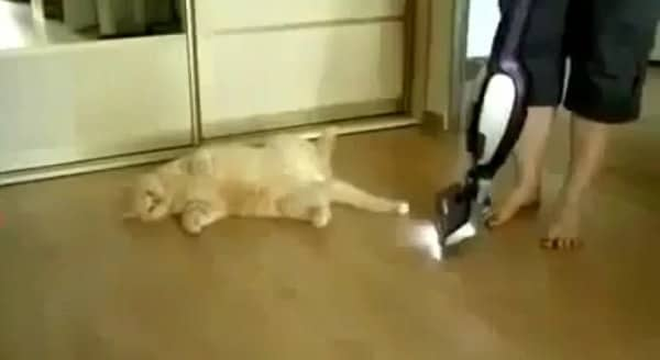 """Cat Loves to be """"Vacuumed"""" – VIDEO"""