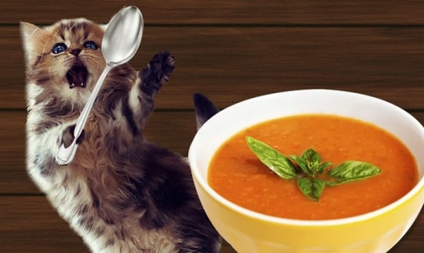 Soup … For Cats!