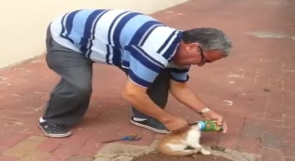 Good Samaritan Saves Kitty From Suffocating - VIDEO