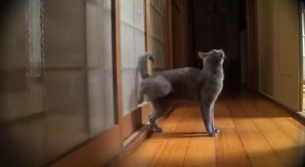 """""""Let Me In Or I'll Huff and I'll Puff and I'll Break the Door Down!"""" - VIDEO"""