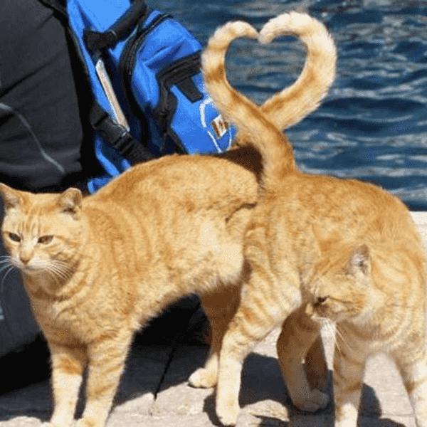 cat-behavior-6-min