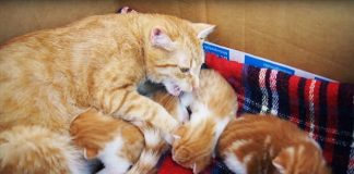 "Mama Cat ""Talking"" To Her Babies - VIDEO"