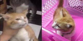 Out of Spite, Man 'Strangles' Girlfriend's Cat After His Calls Were Ignored