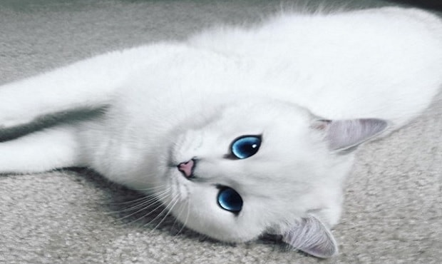 Coby, the Cat With The Most Stunningly Beautiful Eyes on the Internet!