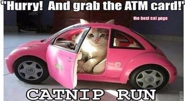 catnip run
