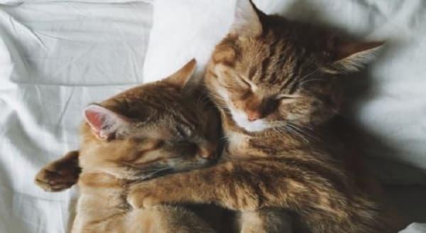 ginger-cats-hugging-min