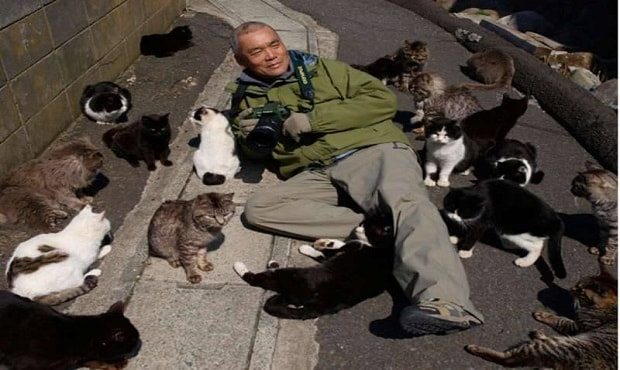 The Cat Food Shortage on Japan's Cat Island and the Recent Miracle That Saved Them ..