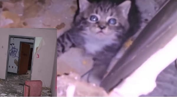 Man Hears Frantic Meows Coming From Inside Abandoned Hospital, Goes on a Mission to Find a Kitten – VIDEO