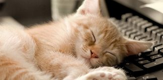 Does Your Cat Have Cancer? 10 Symptoms to Look For