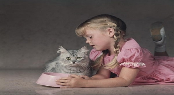 Top 9 Best Cats for Kids!