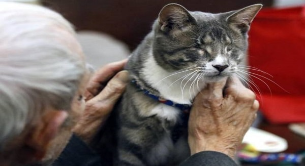 Toby the Blind Therapy Cat Visits Senior Citizens, Inspiring Some Just To Get Out of Bed