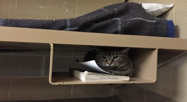Indiana Jail Pairs Cats with Convicts To Improve Quality of Life for Both