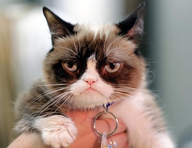 Grumpy Cat, who surged to internet stardom, has a rival feline with a sassy stare.