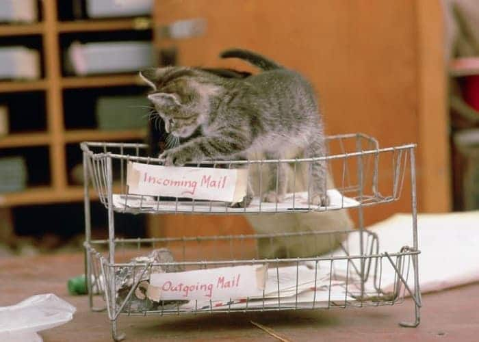 The History of the Post Office Cats