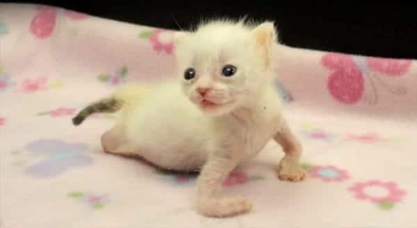 pretzel-kitten-696x372-min