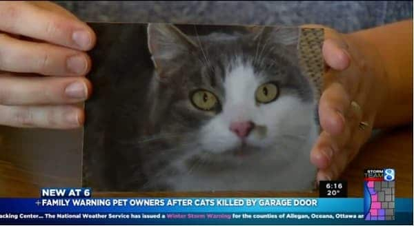 Garage Door Kills 2 Cats And A Warning for All Cat Lovers