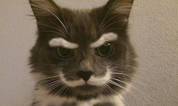 21 Internet Famous Cats With The Most Memorable Markings