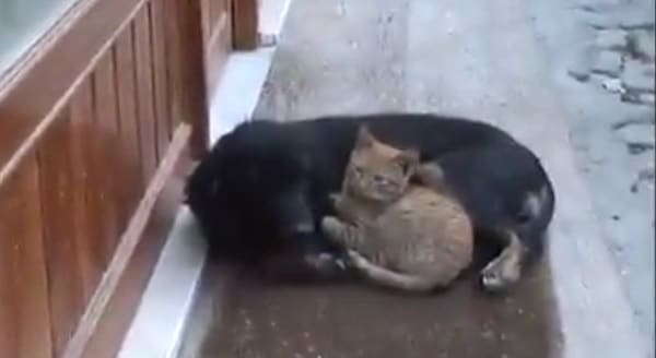 Stray Dog Decides To Keep Stray Cat Company - VIDEO