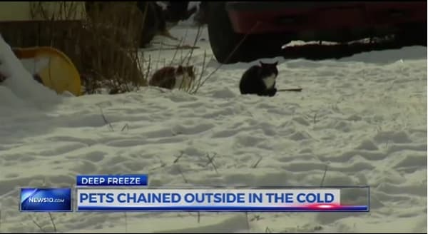 Cats and Dogs Chained Outside of a Home In the Freezing Cold In New York