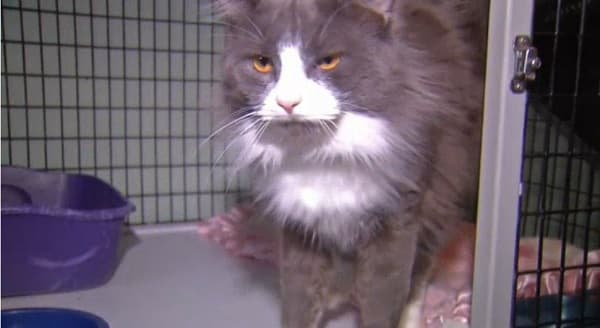 Connecticut Shelter Seeking to Re-home 60 Seized Cats