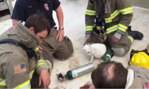 3 Cats and 1 Dog Recovering From Recent Fire in Texas – VIDEO