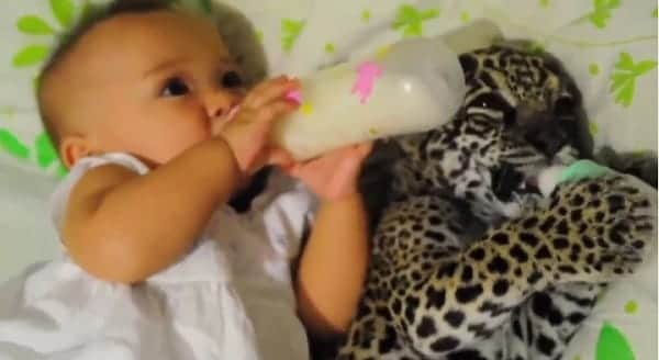 Two Babies Sharing a Meal – VIDEO