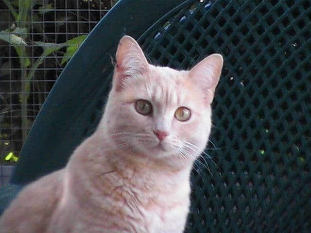 staring-cat 4-min