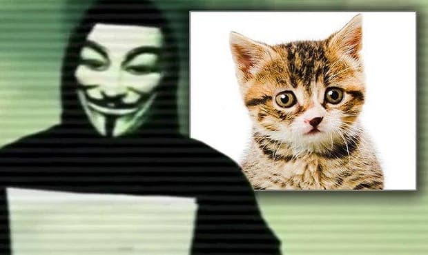 Anonymous declares war on 'cat killer' who admits to slaughtering moggies with a BOW AND ARROW
