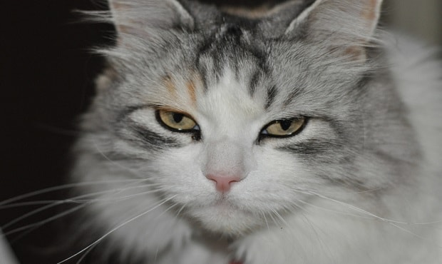 Is this cat trying to tell us something? (Photo: Chris Gehlen/CC BY-ND 2.0)