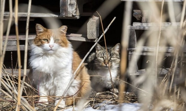 Critics Pointing Out Possible Problems With Feral Cat Colonies in Toronto