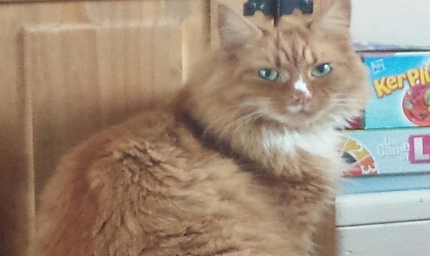 Dookie the ginger cat, who was missing from his home in Corby for five weeks