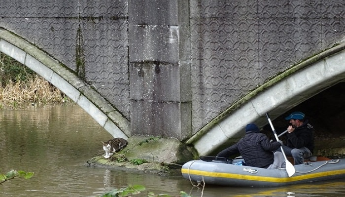Claudia the cat was rescued after getting into some trouble at Dolphin Bridge. PICTURES TISH KERKHAM.