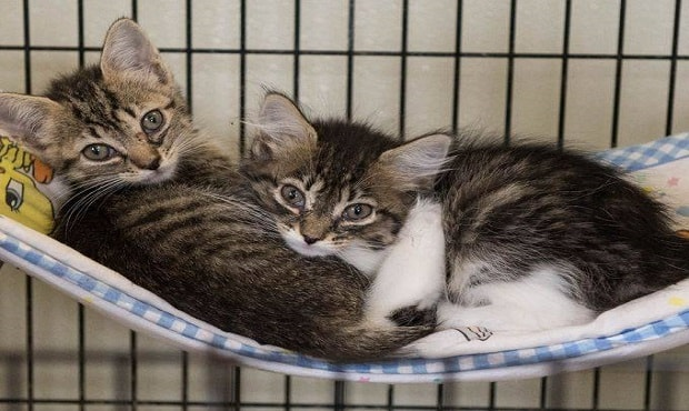 Woman Arrested for Breaking and Entering and Stealing Her 2 Seized Cats Back from Shelter