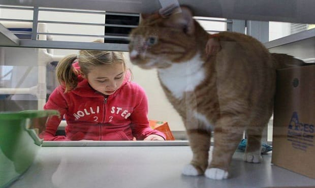 Iowa City Kids Honing Reading Skills by Reading to Shelter Cats!