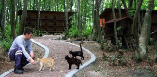 "A Small ""Town"" Built ... Just for Homeless Cats!"