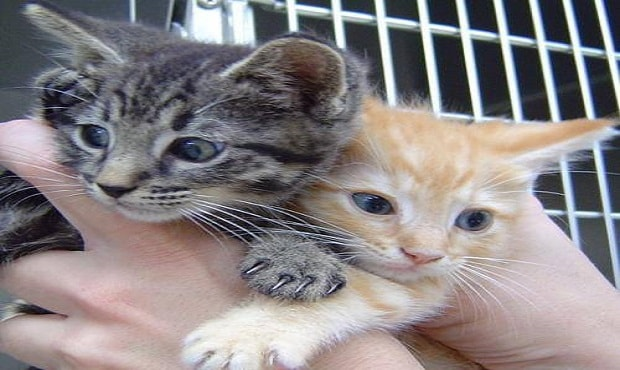 ASPCA Adoption Events Scheduled for 600 Rescued Cats and Dogs in North Carolina