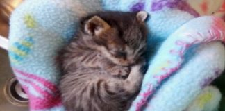 Kitten Found on Side of a Road, Alone and Barely Breathing, Until ....