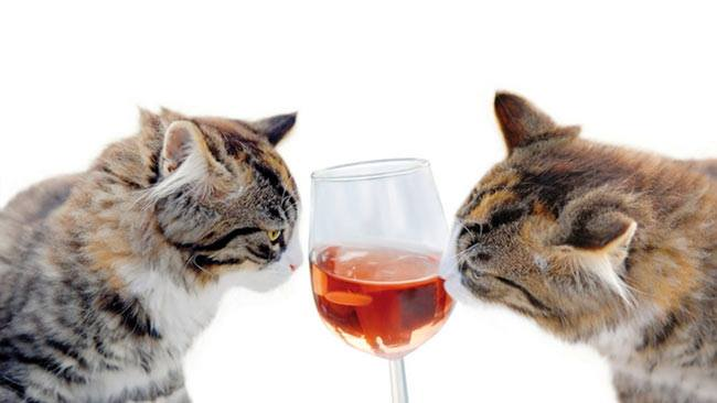 Why Go to a Club? Cat Lovers Can Now Stay at Home and Drink Wine … WITH THEIR CATS!