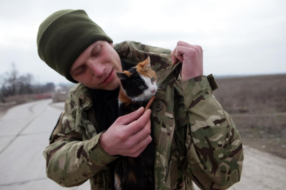 The Ukraine War and the Cats and Dogs Who Have Become Like Family to Soldiers on Both Sides!