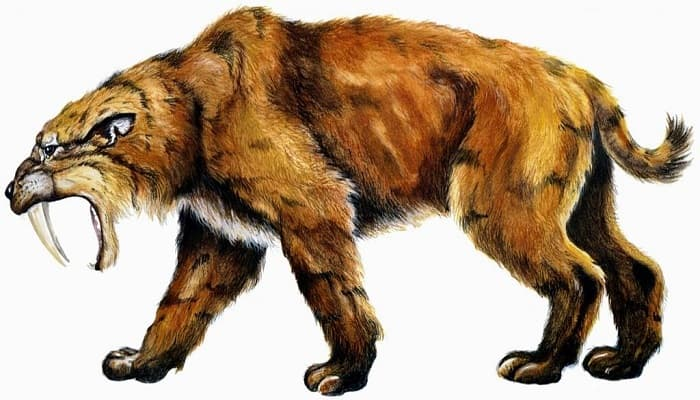 Saber-toothed Cats Were Once the Lions in Prehistoric South America