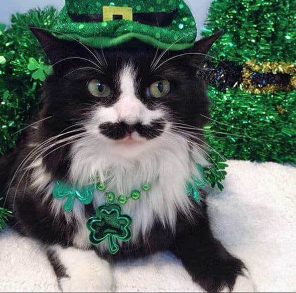 Dressing up for St Patrick's day