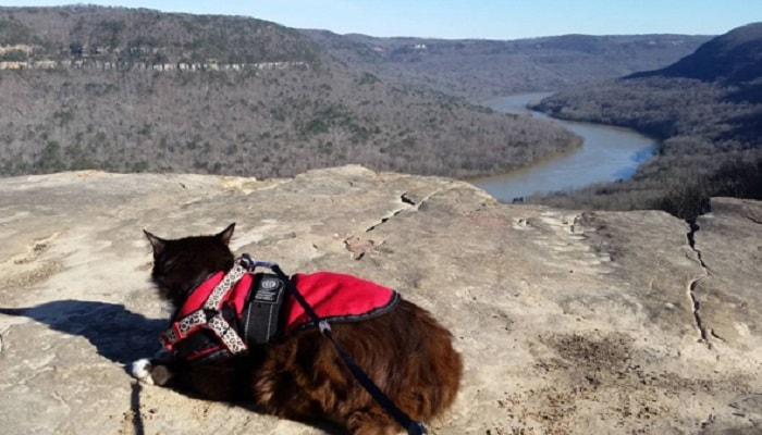 Meet Tuxie, The tuxedo Cat Who Loves To Hike!