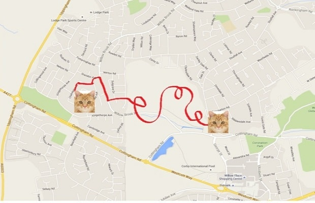 Is this the route that Dookie took on his mystery adventure?