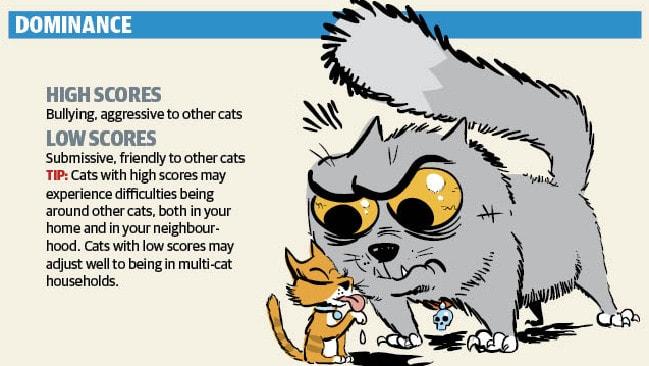 Dominant cat